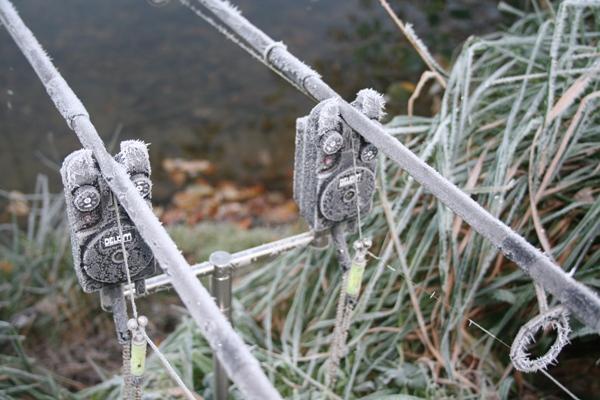 winter_carp_0